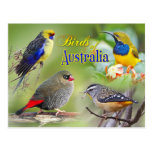 Birds of Australia Postcard