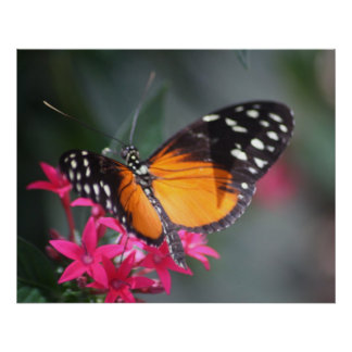 Black and Orange Spotted Butterfly 2 Poster