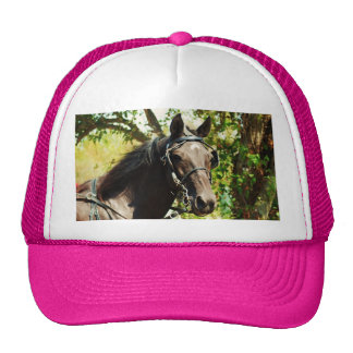 Black horse at National Drive Cap