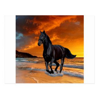 BLACK HORSE, BLACK STALLION, RUNNING AND FREE POSTCARD