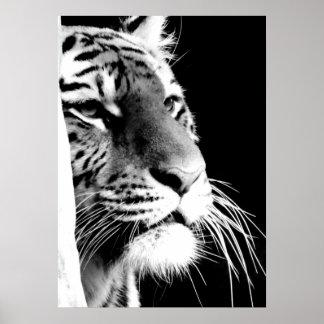 Black & White Tiger Eyes Poster