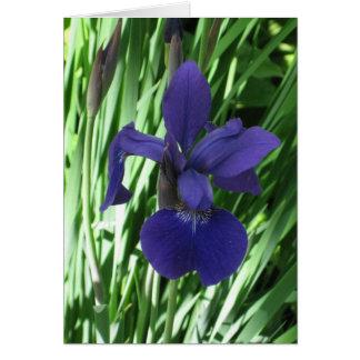 Blank_Blue Iris Note Card