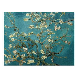 Blossoming Almond Tree - Van Gogh Postcard