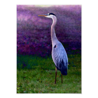 Blue Heron Collection Poster