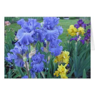 Blue Iris Note Card