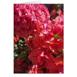 bougainvillea greeting card