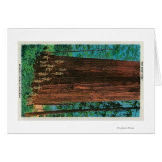 Boy Scout Tree on Redwood HighwayRedwoods, CA Greeting Card