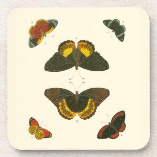 Bright Butterflies by Pieter Cramer Drink Coaster