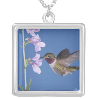 Broad-tailed Hummingbird, Selasphorus Square Pendant Necklace