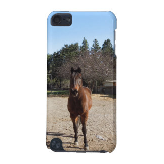 Brown Horse in Los Alamos, CA iPod Touch 5G Covers