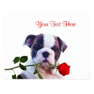 Bulldog Puppy Red Rose Valentine Design Postcard