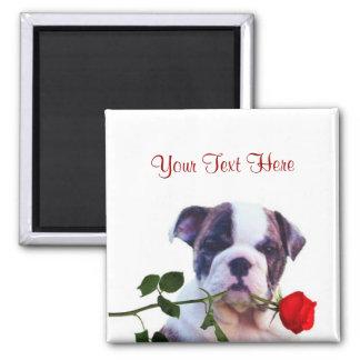 Bulldog Puppy Red Rose Valentine Design Square Magnet