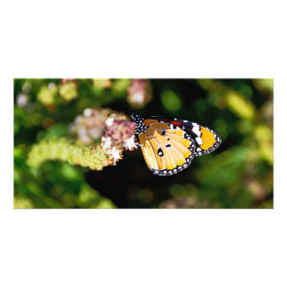 Butterfly Custom Photo Card
