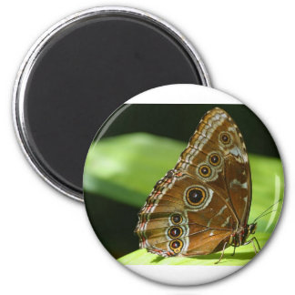 Butterfly Wings 6 Cm Round Magnet