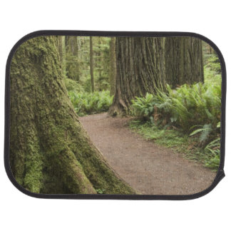 CA, Jedediah Smith State Park, Simpson-Reed Floor Mat