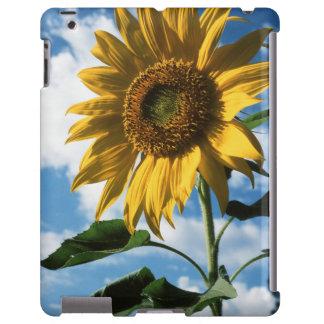 California, A Mammoth Sunflower (Helianthus) 2