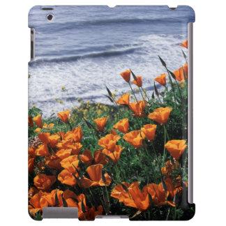 California, Big Sur Coast, California Poppy