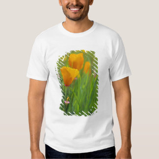 California golden poppies in a green field tshirts
