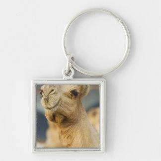 Camel Market near Cairo, Egypt Silver-Colored Square Key Ring