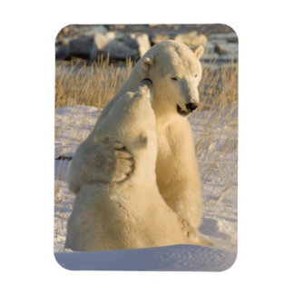 Canada, Manitoba, Hudson Bay, Churchill. Rectangular Photo Magnet