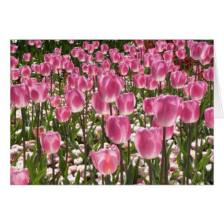 Canberra Tulips Greeting Card