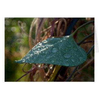 'Captured Rain' Leaf Greeting/Note Card