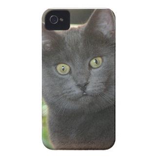 Cat BlackBerry Bold Case