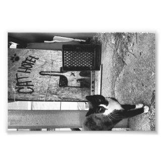 Cat Hotel Photograph