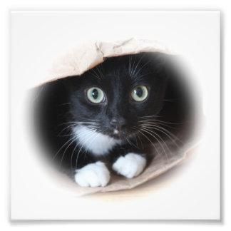 Cat in a bag photo art