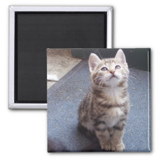 cats 2 SAND Square Magnet
