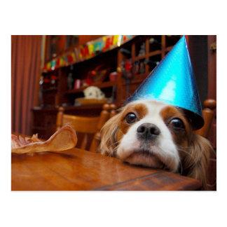 Cavalier King Charles Spaniel Birthday Postcard