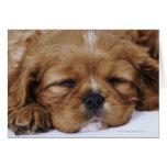 Cavalier King Charles Spaniel puppy sleeping Greeting Card