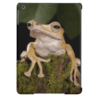 Central PA, USA,. Borneo Eared Frog; iPad Air Cover