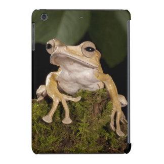 Central PA, USA,. Borneo Eared Frog; iPad Mini Retina Cases