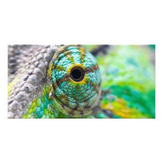 Chameleon eye photo cards