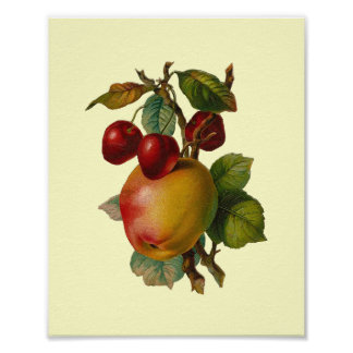 """""""Cherries and Apples"""" Vintage Poster"""