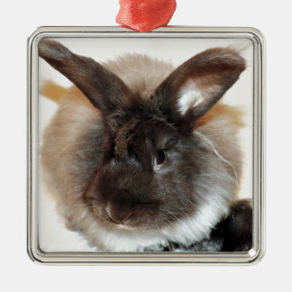Chocolate French Angora Bunny Rabbit Photograph Silver-Colored Square Decoration