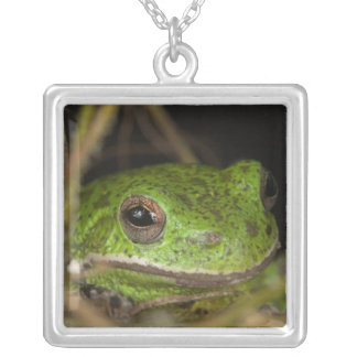 Close-up of a Barking treefrog on limb resting Square Pendant Necklace