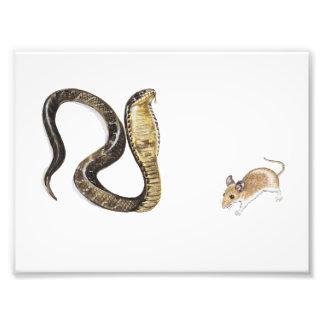 Cobra vs Rat Photo