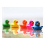 Colourful Rubber Ducks Postcard