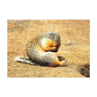 Columbia Ground Squirrel Stretched Canvas Prints
