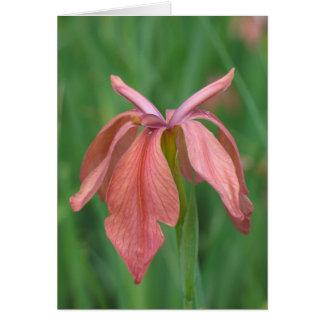 Copper Iris Note Card