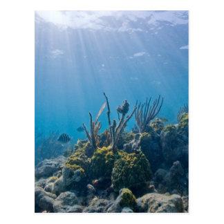Coral Reef Marine Life Postcard