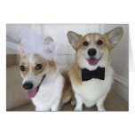corgis dressed up as bride and groom greeting card