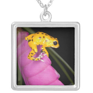 Costa Rica. Close-up of poison dart frog on Square Pendant Necklace