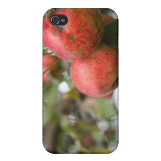 Crab Apple iPod Case iPhone 4/4S Covers