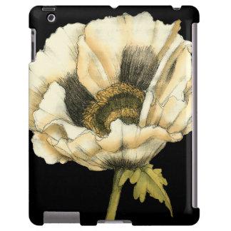 Cream Poppy Flower on Black Background