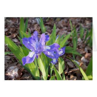 Crested Iris Note Card