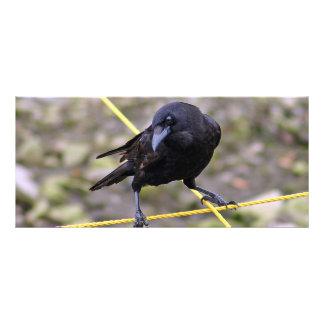 Crow at Crossroads Rack Card
