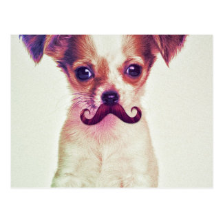 Cute Chihuahua With Purple Funny Mustache Postcard